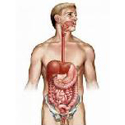 Gastro intestinal Tract system